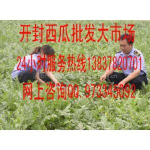 河南省开封市万亩西瓜产地批发