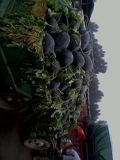 河南西瓜公司-河南西瓜总代理-河南西瓜服务供应商