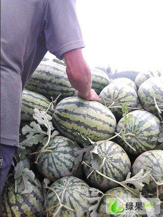 大量供应2014年河南西瓜