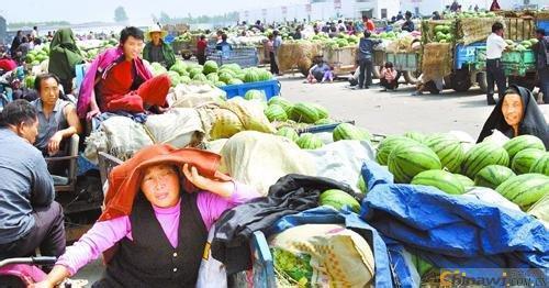 河南百万亩西瓜即将上市、欢迎前来采购2014年河南西瓜