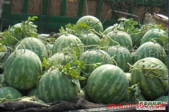 河南西瓜已开园-河南西瓜上市价格/0.2-河南西瓜那里便宜