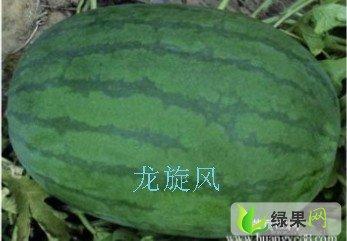 河南西瓜 - 秦军杰