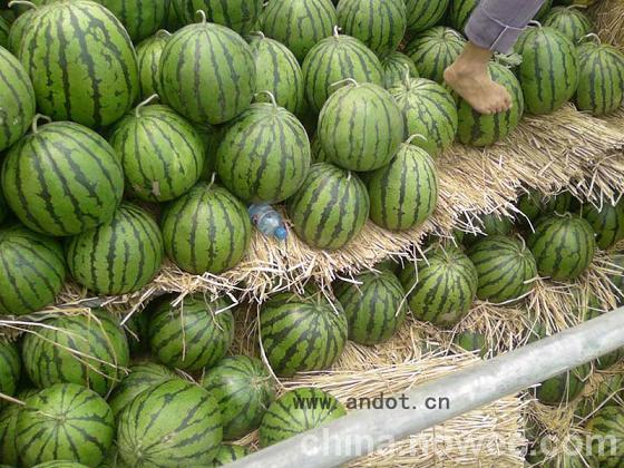 供应2014年西瓜 河南开封西瓜 西瓜当天价格