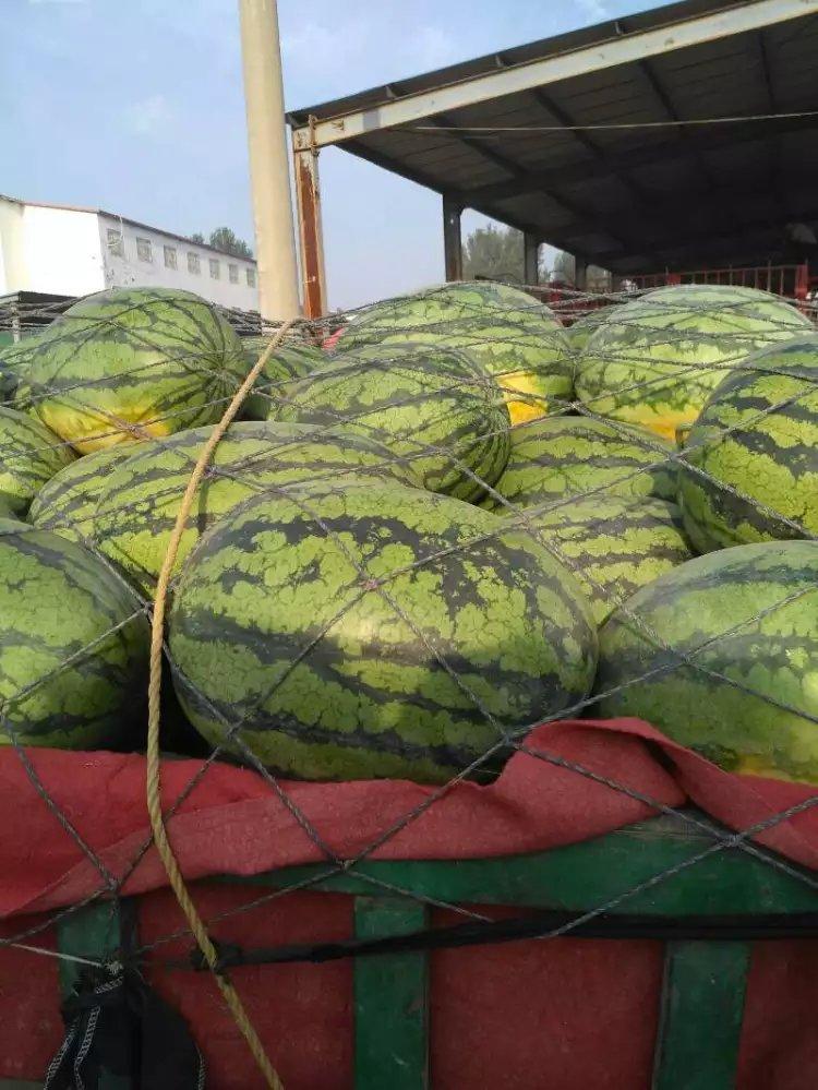 河南西瓜都有什么品种
