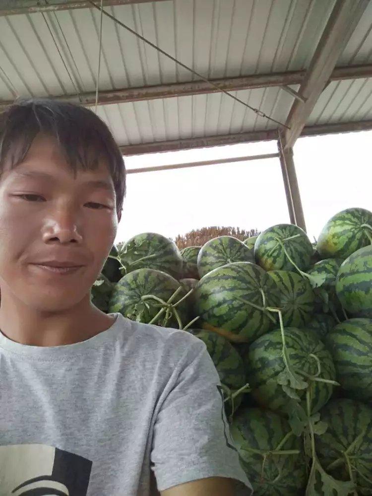 最新河南西瓜市场批发价格