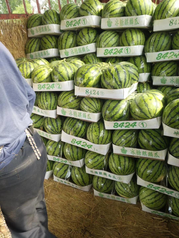 河南都有什么西瓜品种 甜王 8424 美都 价格不贵